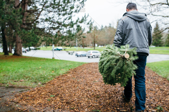 Man carrying a Christmas tree on a path toward a parking lot
