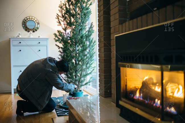 Man setting up a live Christmas tree in front of a sunny window
