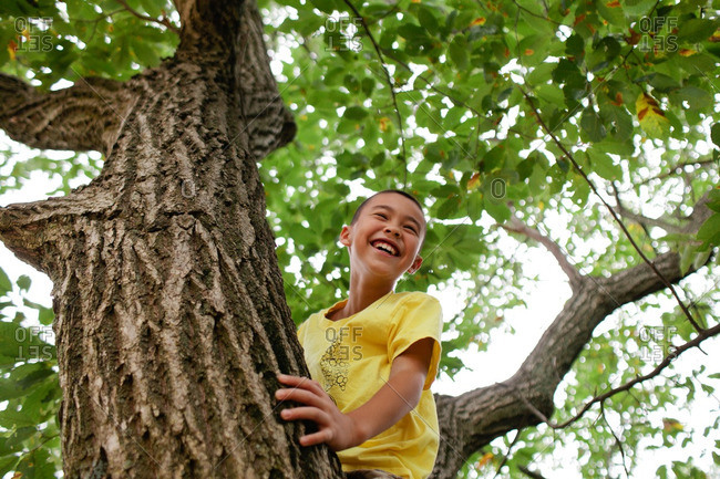 Smiling boy in a tree