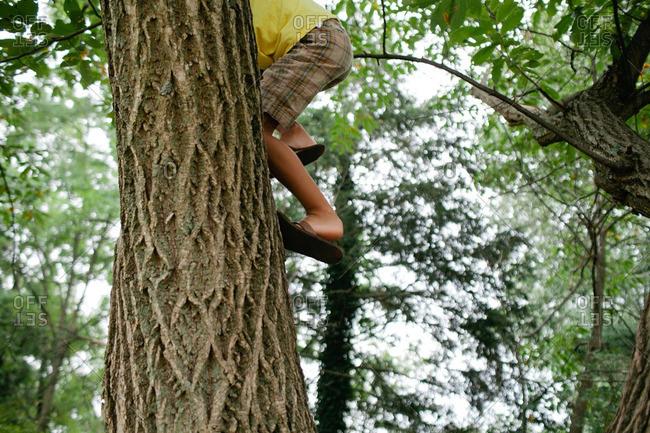 A boy climbing into tree