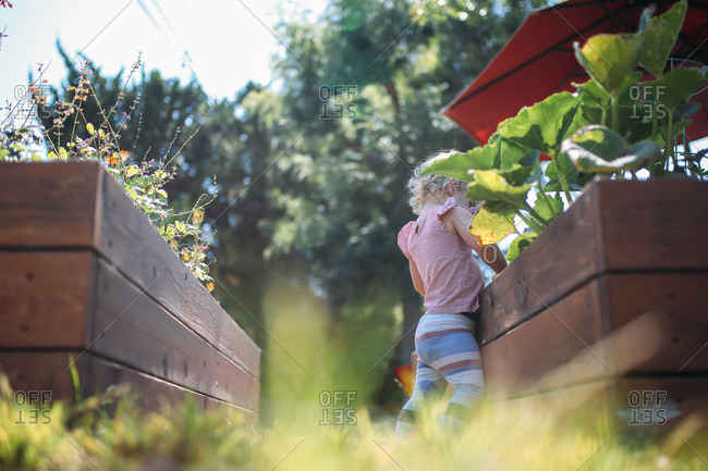 Little blonde girl looking at a raised garden