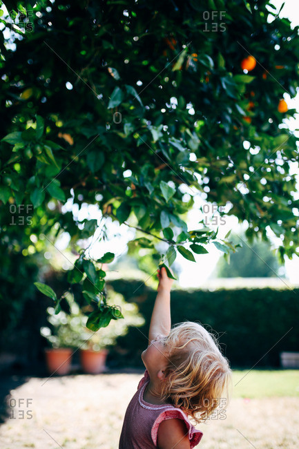 Little blonde girl reaching for branches in a tree