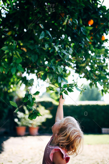 Little girl reaching for branches in a tree