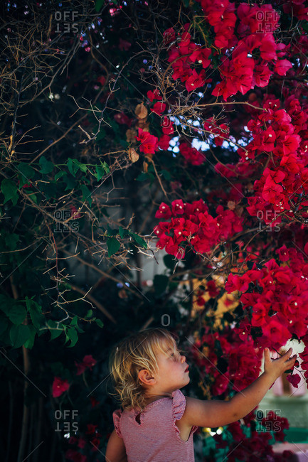 Little girl touching red flowers on a bush