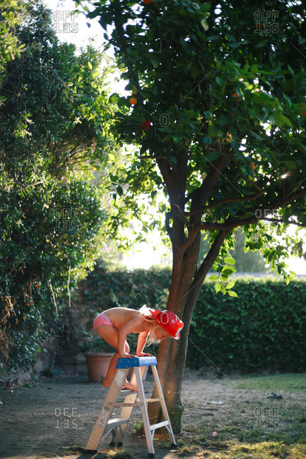 Little blonde girl climbing on a step ladder under an orange tree