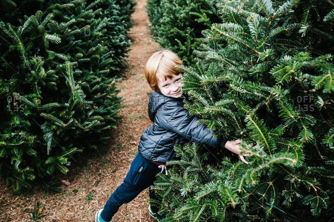 Boy hugging tree on a tree farm