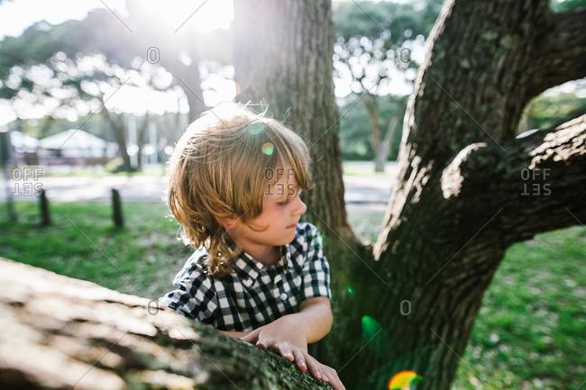 Redhead boy climbing a tree
