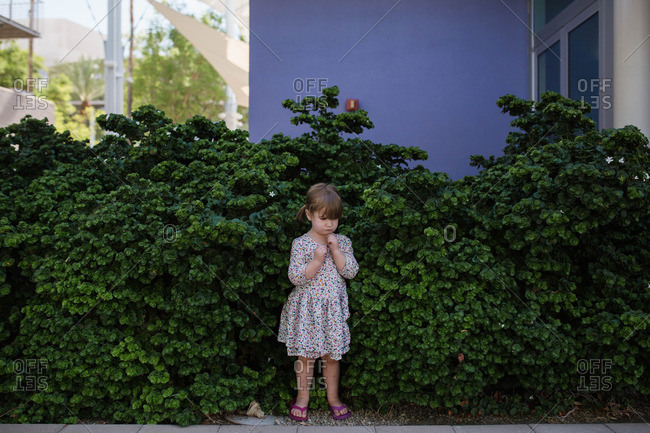 Toddler girl in flowered dress standing in hedges