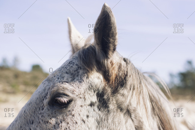 Horse, close-up from the Offset Collection