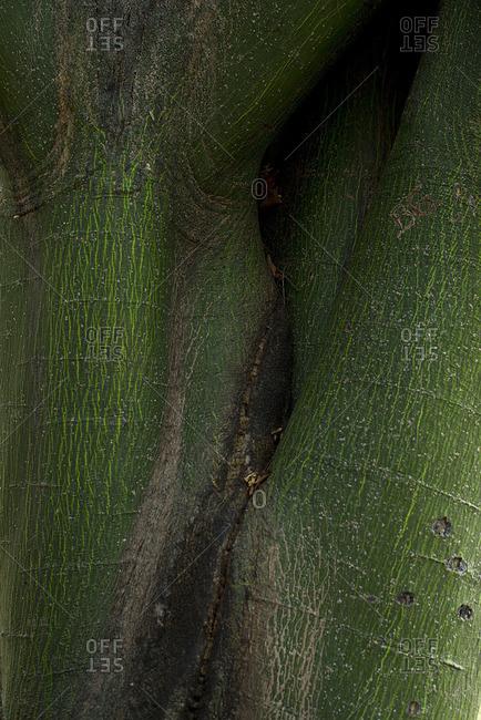Close-up of green tree bark