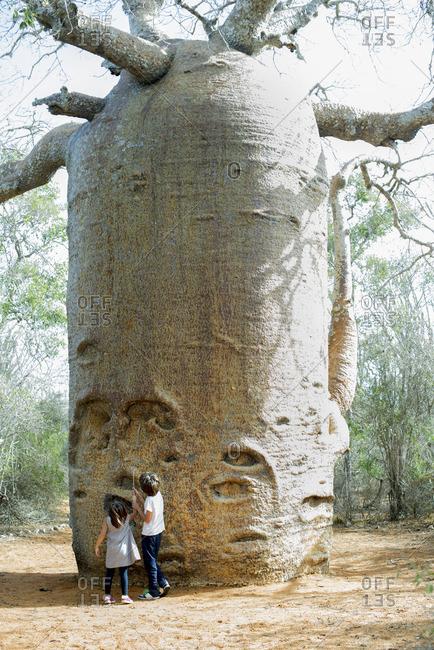 Children looking up at baobab tree