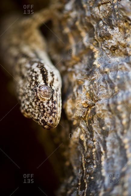 Lizard on tree, close-up