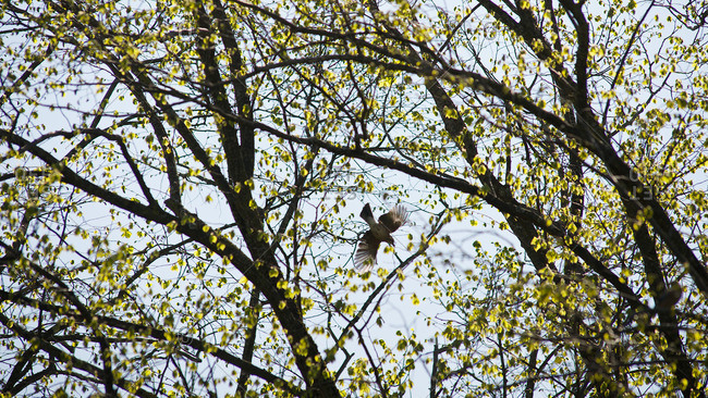 Bird flying through branches