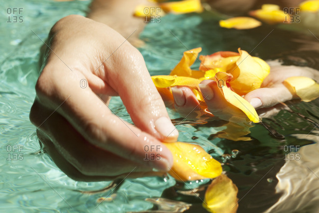 Gathering flower petals floating on water