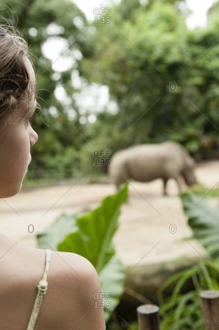 Girl watching animal at zoo, rear view