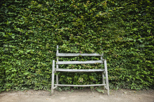 Rustic wooden bench in front of large hedge
