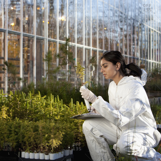 Indian scientist in clean suit working in greenhouse