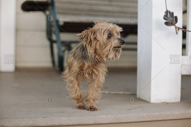 Small dog standing on the front porch of a house