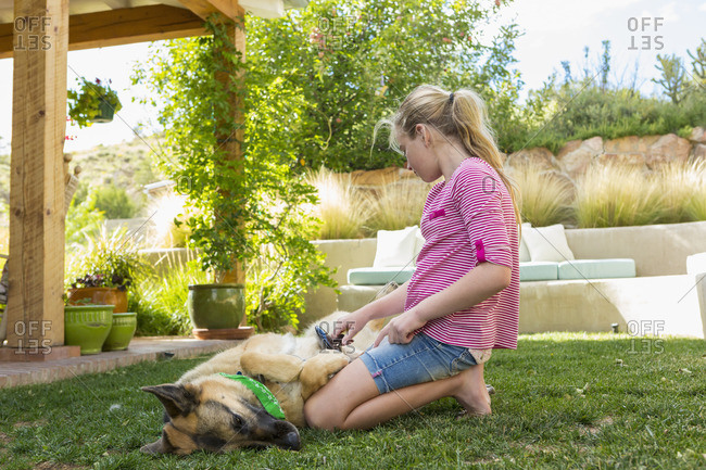 Girl brushing dog\'s fur in yard