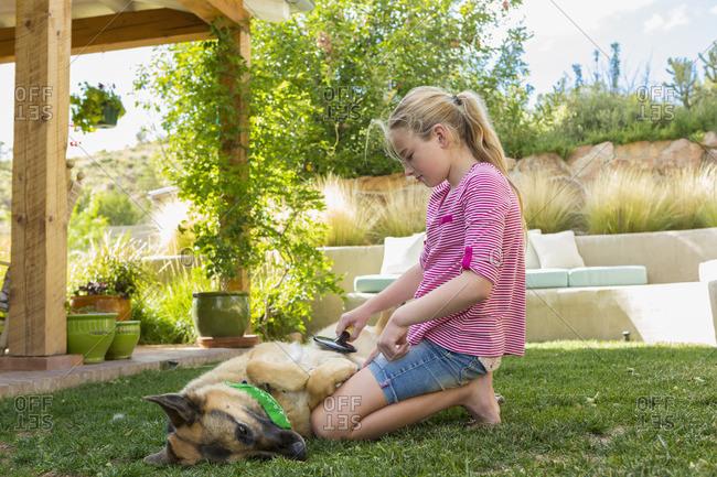 Girl brushing dog's fur
