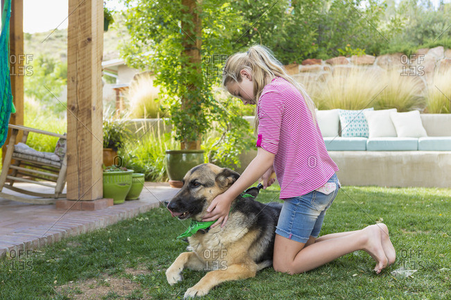 Girl brushing German shepherd