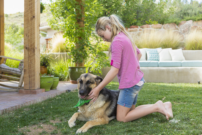Girl brushing a German shepherd