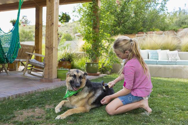 Girl grooming German shepherd