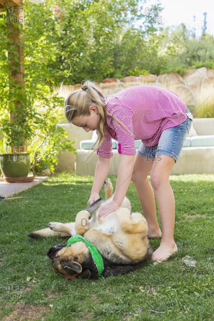 Girl grooming German shepherd dog