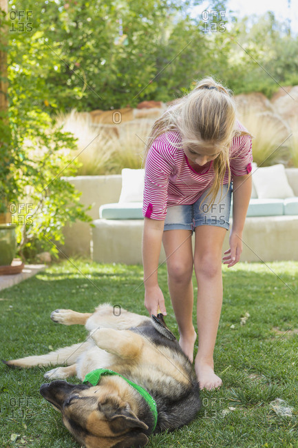 Girl brushing German shepherd dog