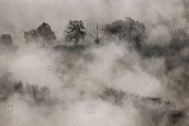 Fog surrounding trees In Tavernet, Barcelona, Spain