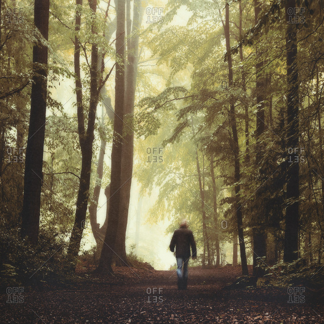 Germany- Man walking in forest