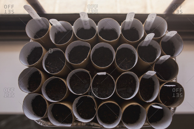 Overhead view of seeds being started in tray of cardboard tubes