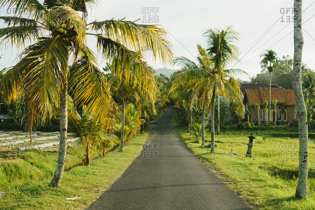 Palm trees lining a rural road in Bali