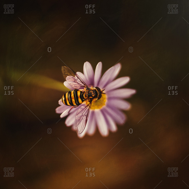 Bee on a small purple flower