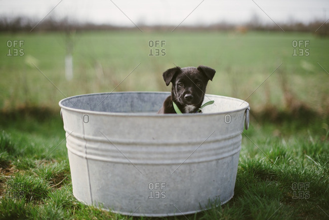 Puppy sitting in an old wash basin in the middle of a field