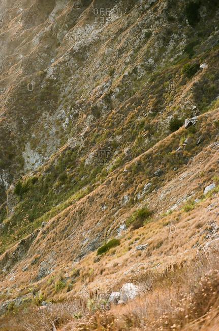 Vegetation on a steep hillside