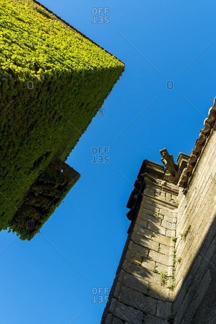 View of cyan clear sky with ancient building and green hedge from below