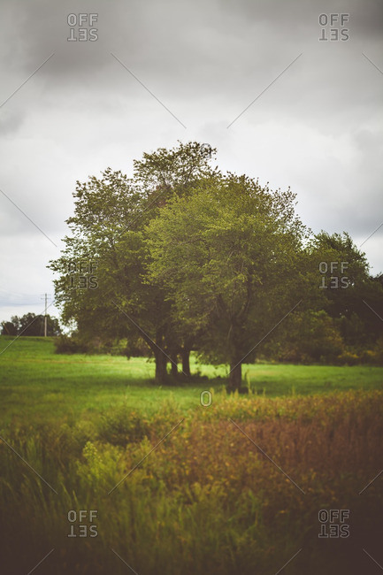 Trees in a grassy field on an overcast day
