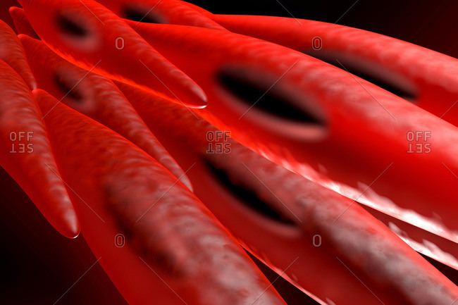 3D rendered illustration of a non-striated myocyte, smooth muscle cell