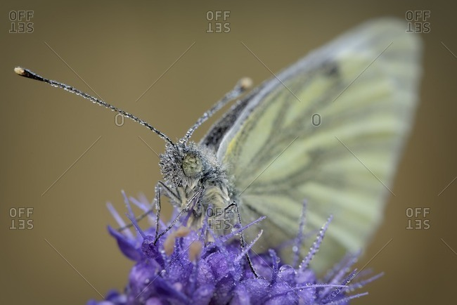 Wet Green, veined White on blossom