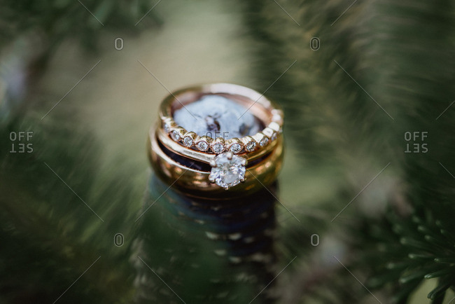 Close up of wedding rings surrounded by pine branches
