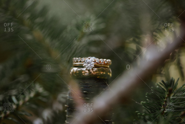 Wedding rings surrounded pine branches