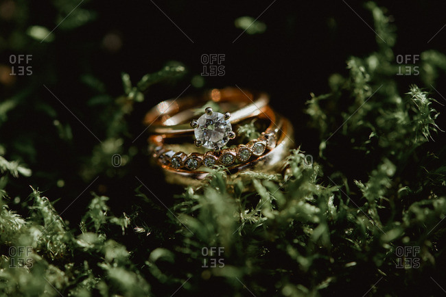 Wedding rings surrounded plants