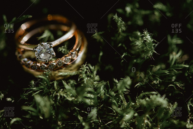 Close up of wedding rings surrounded plants