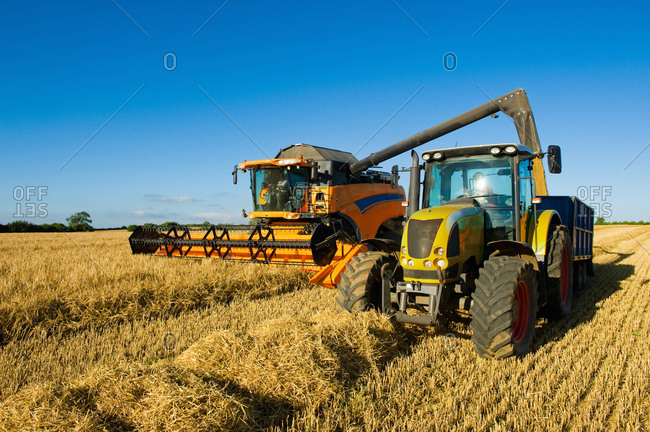 Farmers driving tractor and combine harvester to harvest wheat field