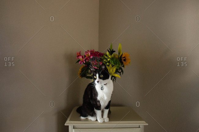 Cat sitting on an armoire next to a vase filled with flowers