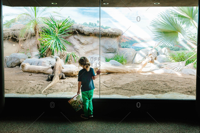 Boy standing in front of an exhibit in a reptile house