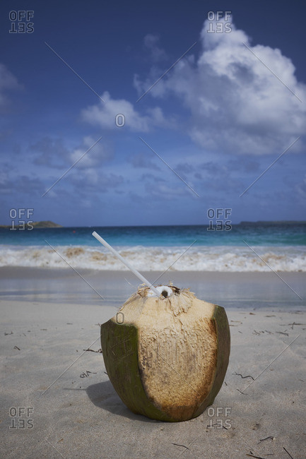 Coconut ready to drink on sandy beach
