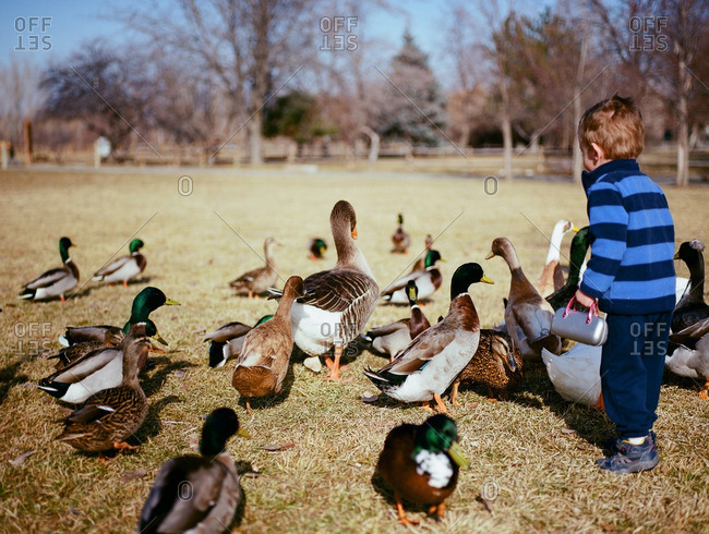 Boy by ducks and geese