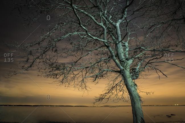 Tree lit by streetlights